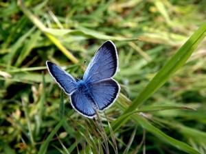 butterfly-759692_1920